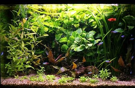 Pin Einrichtung Eines Aquariums on Pinterest