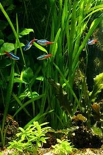 zu viel nitrat im aquarium